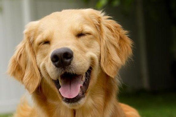 ¿Por qué nosotros tenemos que ir al dentista y los animales no necesitan ortodoncia?